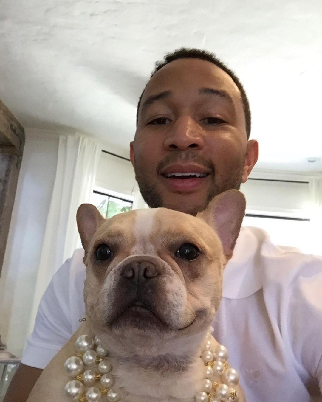 Chrissy Teigen And John Legend's Bulldog Passes Away