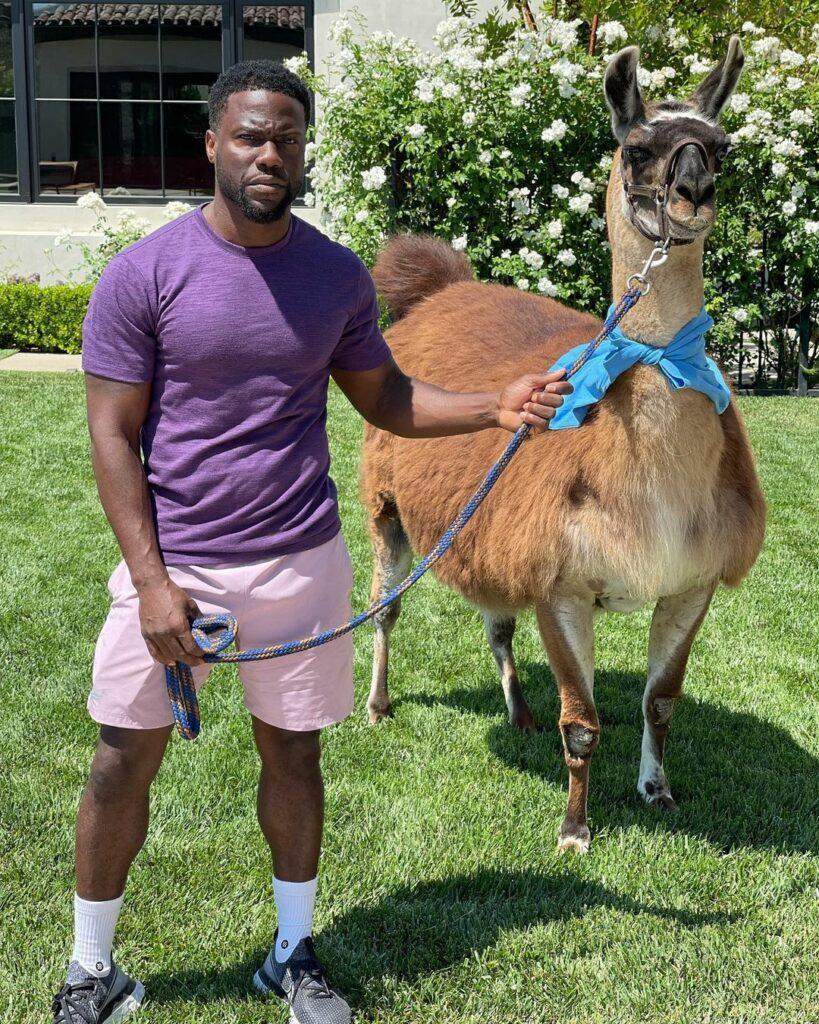 Kevin Hart and a lama.