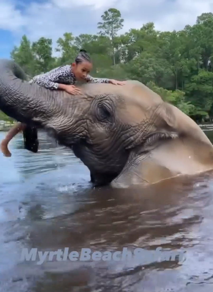Chris Brown's Daughter Was In DANGER Riding Elephant, PETA Wants Investigation